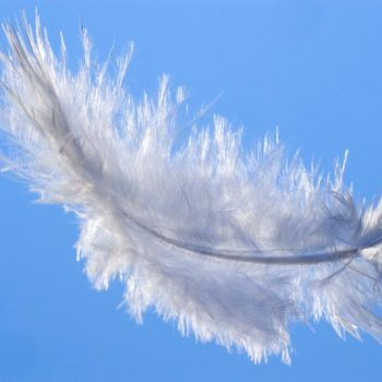 softening and resting feather