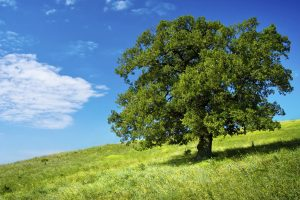Guided Meditation The Tree